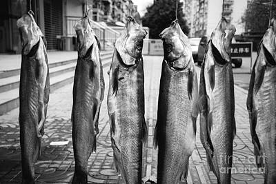 Photograph - Something Fishy 2 by Dean Harte