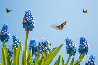 Hyacinths Wall Art - Photograph - Something In The Air by John Edwards