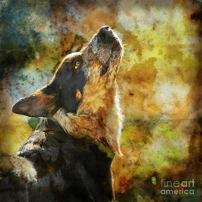 Herding Dog Digital Art - Something In The Wind by Judy Wood