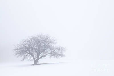 Photograph - Sometimes In Winter by Alan L Graham