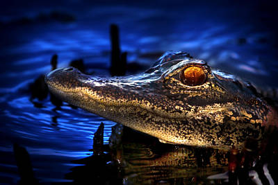 Beauty Mark Photograph - Son Of A Gator by Mark Andrew Thomas
