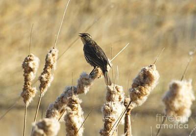 Photograph - Song Bird by Andrea Kollo