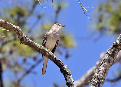 Photograph - Song Bird by Kay Lovingood