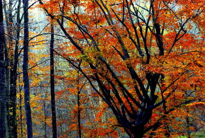 Of Autumn Photograph - Song Of Autumn by Karen Wiles