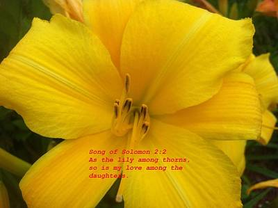 Art Print featuring the photograph Song Of Solomon 2  2 by Saribelle Rodriguez