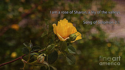 Rose Of Sharon Tree Photograph - Song Of Solomon by Janice Rae Pariza