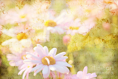 Photograph - Song Of Spring I - Lovely Soft Pink Daisies by Beverly Claire Kaiya