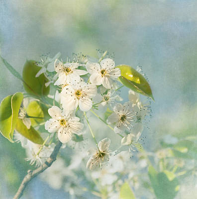 Photograph - Song Of Spring by Kim Hojnacki