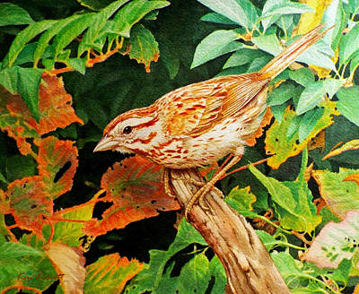 Sparrow Painting - Song Sparrow  by Ken Everett