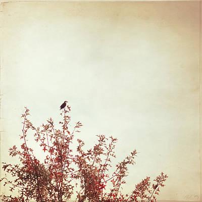Songbird Art Print by Carolyn Cochrane