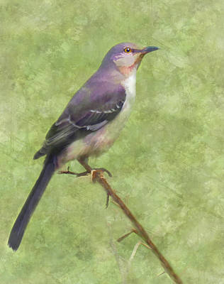 Mockingbird Digital Art - Songster by Grace Dillon