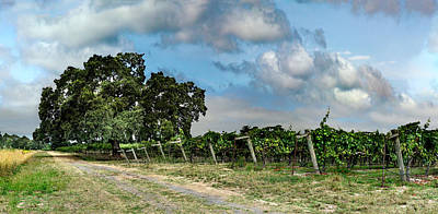 Pinot Noir Photograph - Sonoma County Life by Stan Angel