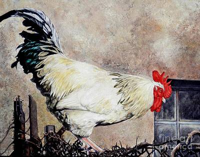 Sonoma Rooster Art Print by Amanda Hukill