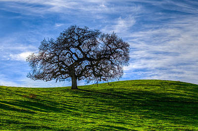 Sonoma Tree Art Print by Chris Austin