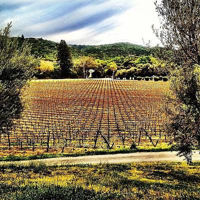 Vineyard Photograph - Sonoma Valley ! Beautiful ! #vineyards by Candace Hughes