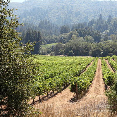 Sonoma Vineyards In The Sonoma California Wine Country 5d24515 Square Art Print by Wingsdomain Art and Photography