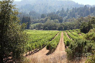 Photograph - Sonoma Vineyards In The Sonoma California Wine Country 5d24515 by Wingsdomain Art and Photography