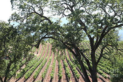 Pastoral Vineyard Photograph - Sonoma Vineyards In The Sonoma California Wine Country 5d24619 by Wingsdomain Art and Photography