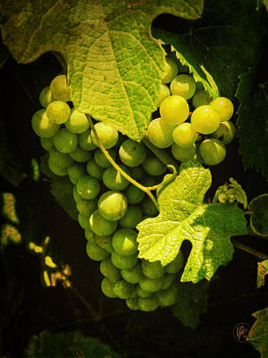 Grape Leaves Photograph - Sonoma Wine Grapes 002 by Lance Vaughn