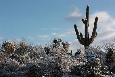 Photograph - Sonora Desert Snow by Joe Kozlowski