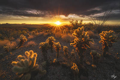 Peter James Nature Photograph - Sonoran Burn by Peter Coskun