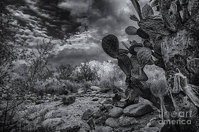 Mark Myhaver Rights Managed Images - Sonoran Desert 15 Royalty-Free Image by Mark Myhaver