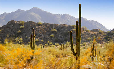 Sonoran Desert Beauty Art Print by Betty LaRue