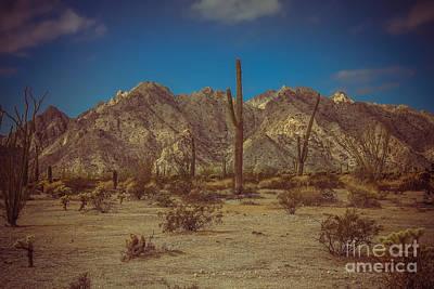 Photograph - Sonoran Desert by Robert Bales