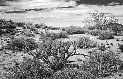 Photograph - Sonoran Desert Song In Black And White by Lee Craig