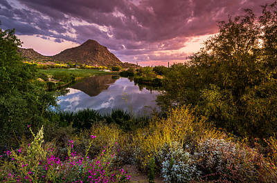 Desert Sunset Photograph - Sonoran Desert Spring Bloom Sunset  by Scott McGuire