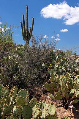 Photograph - Sonoran Desert Spring by Joe Kozlowski