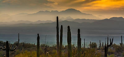 Sonoran Desert Sunset Art Print