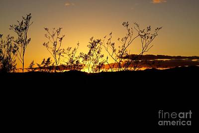 Photograph - Sonoran Desert Sunset by Kerri Mortenson