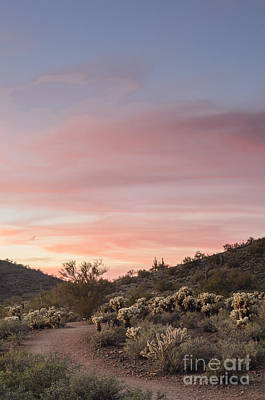 Photograph - Sonoran Desert Sunset by Tamara Becker