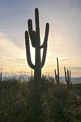 Photograph - Sonoran Desert View by Christopher Rees