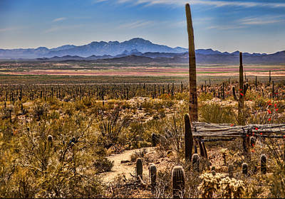 Grimm Fairy Tales Royalty Free Images - Sonoran Desert View Royalty-Free Image by Diana Powell