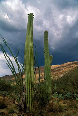 Tucson Photograph - Sonoran Monsoon by Susan  Degginger