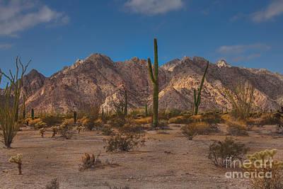 Photograph - Sonoran  by Robert Bales