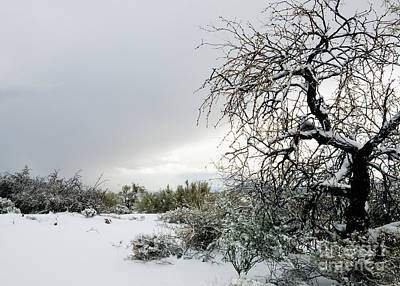 Photograph - Sonoran Snow by Tamara Becker