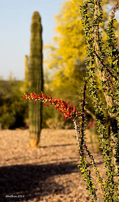 Photograph - Sonoran Spring by Dick Botkin