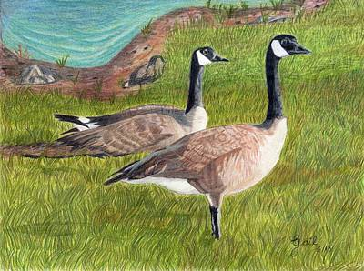 Canadian Geese Drawing - Soon To Be Parents by Gail Seufferlein