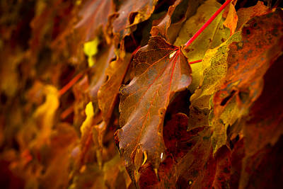 Photograph - Soon To Fall by Christi Kraft