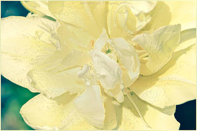 Discount Codes Wall Art - Photograph - Soothing Daffodils by Sonali Gangane
