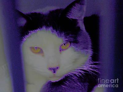 Photograph - Sophisti . Cat by Renee Trenholm