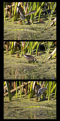 Photograph - Sora by Dawn Currie