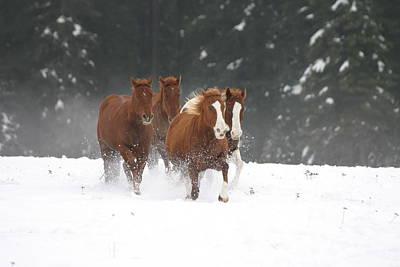 Photograph - Sorel's N Snow by Diane Bohna