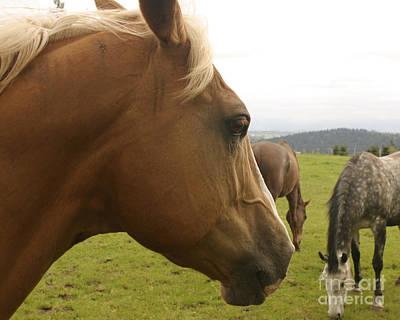 Bath Time Rights Managed Images - Sorrel Horse Profile Royalty-Free Image by Belinda Greb