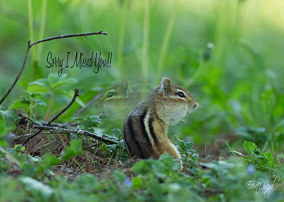 Chipmunk Photograph - Sorry I Missed You by Everet Regal