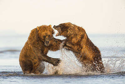 Brown Bear Photograph - Sorting Out The Fishing Hole by Tim Grams
