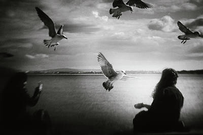 Seagull Photograph - Soul Call by Laura Mexia